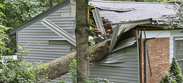 Disaster renovation experts can help with damage to the roof, windows, and other parts of a house caused by a storm.