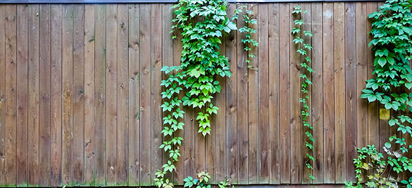 A vertical wood fence is commonly used in residential neighborhoods.