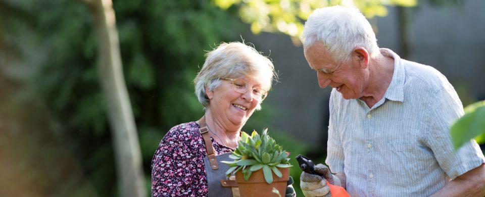 senior-couple-potting-plants
